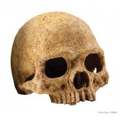 """Decoración Resina """"Human Skull"""""""